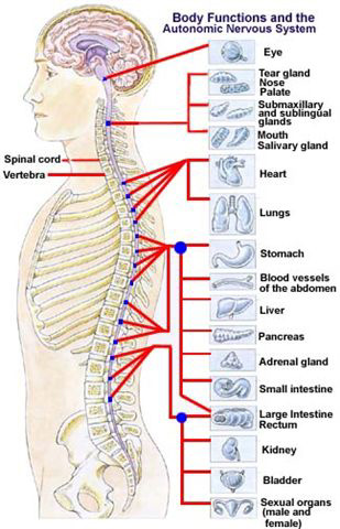 fibromyalgia pressure points diagram. High Blood Pressure